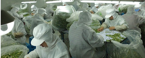 FImportare prodotti alimentari dalla Cina